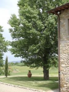 Tuscan pines and terracotta